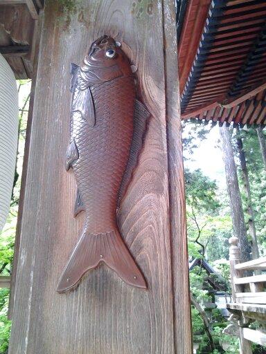 谷汲山の精進落としの鯉